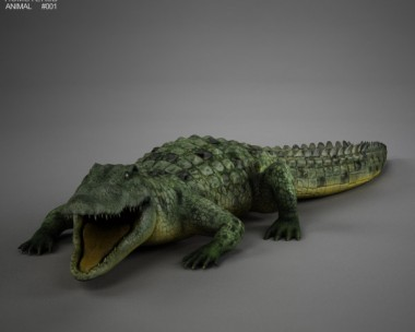 Common Crocodile HD