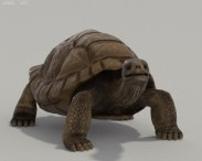 Galapagos Turtle HD