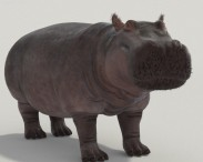 Hippopotamus High Detailed