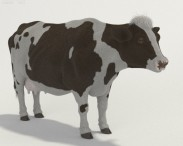Cow High Detailed Rigged